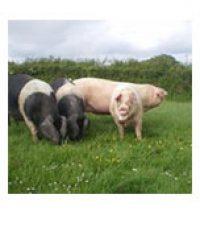 Cornish Pork Pantry