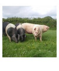 Cornish Pork Pantry