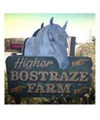 Higher Bostraze Farm