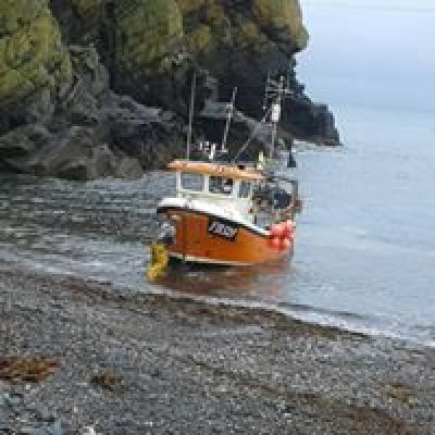 Cadgwith Cove Crab
