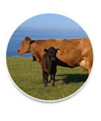 Penare Farms